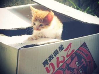 動物病院 拾い猫 検査